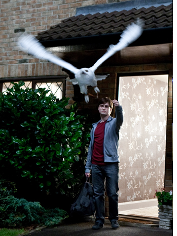 Harry Potter and the Deathly Hallows Part 1 Movie Still