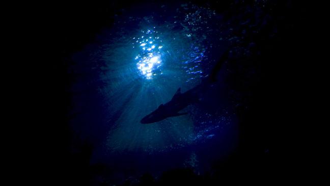 Shark Underwater Night Bottom - H 2011