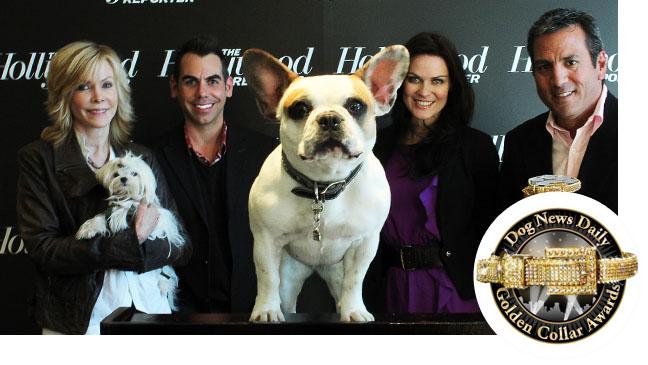 Golden Collar Awards Bubble - H 2012