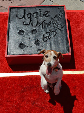 Uggie Grauman's Theater The Artist - P 2012
