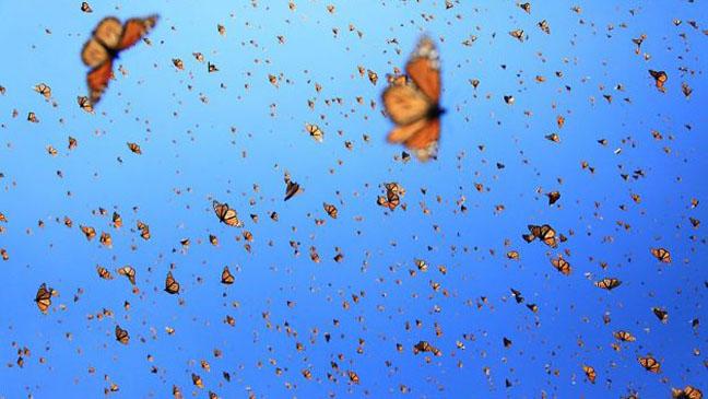 Flight of the Butterflies film still - H 2012