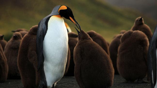 nWave Penguins Still - H 2013