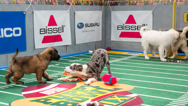 Puppy Bowl IX - H 2013
