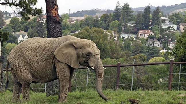 An Apology to Elephants Film Still - H 2013