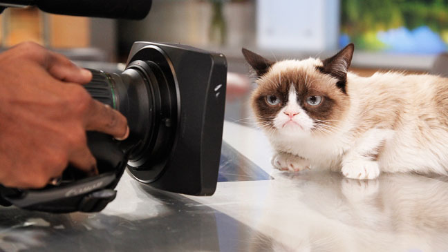 Grumpy Cat in front of camera 2 - H 2013