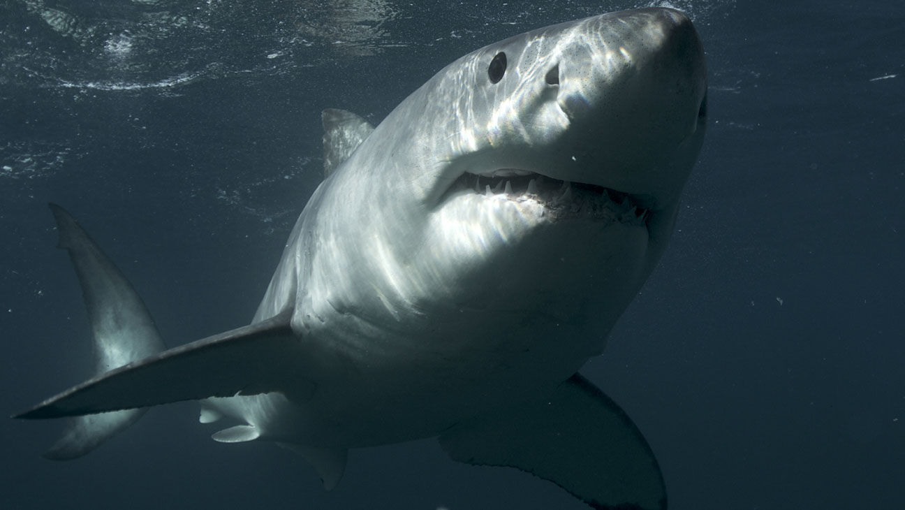 Shark Week Discovery Channel - H 2013