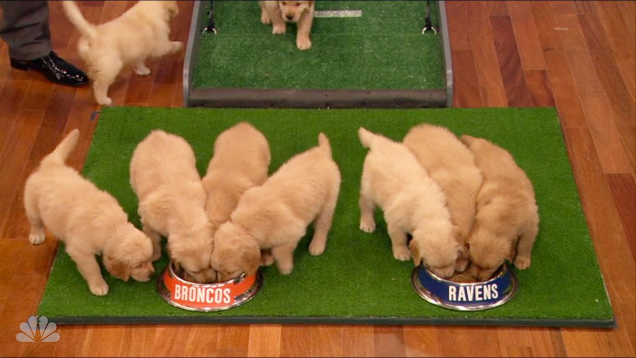 Jimmy Fallon NFL Puppies Screengrab - H 2013