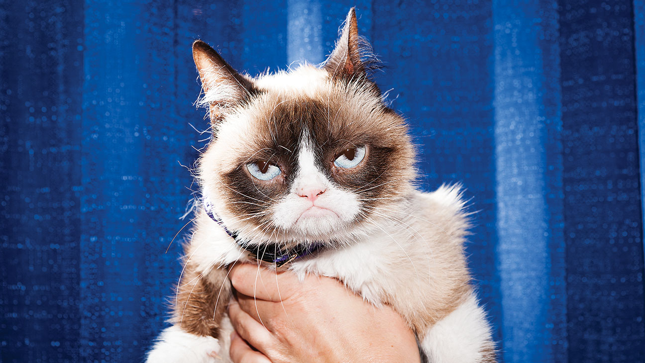 Grumpy Cat Scowl - H 2014