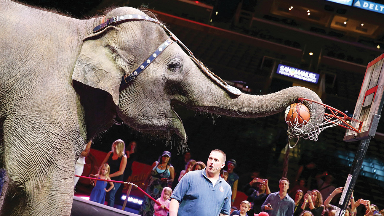 Ringling Bros Spectacle of Cruelty - H 2014