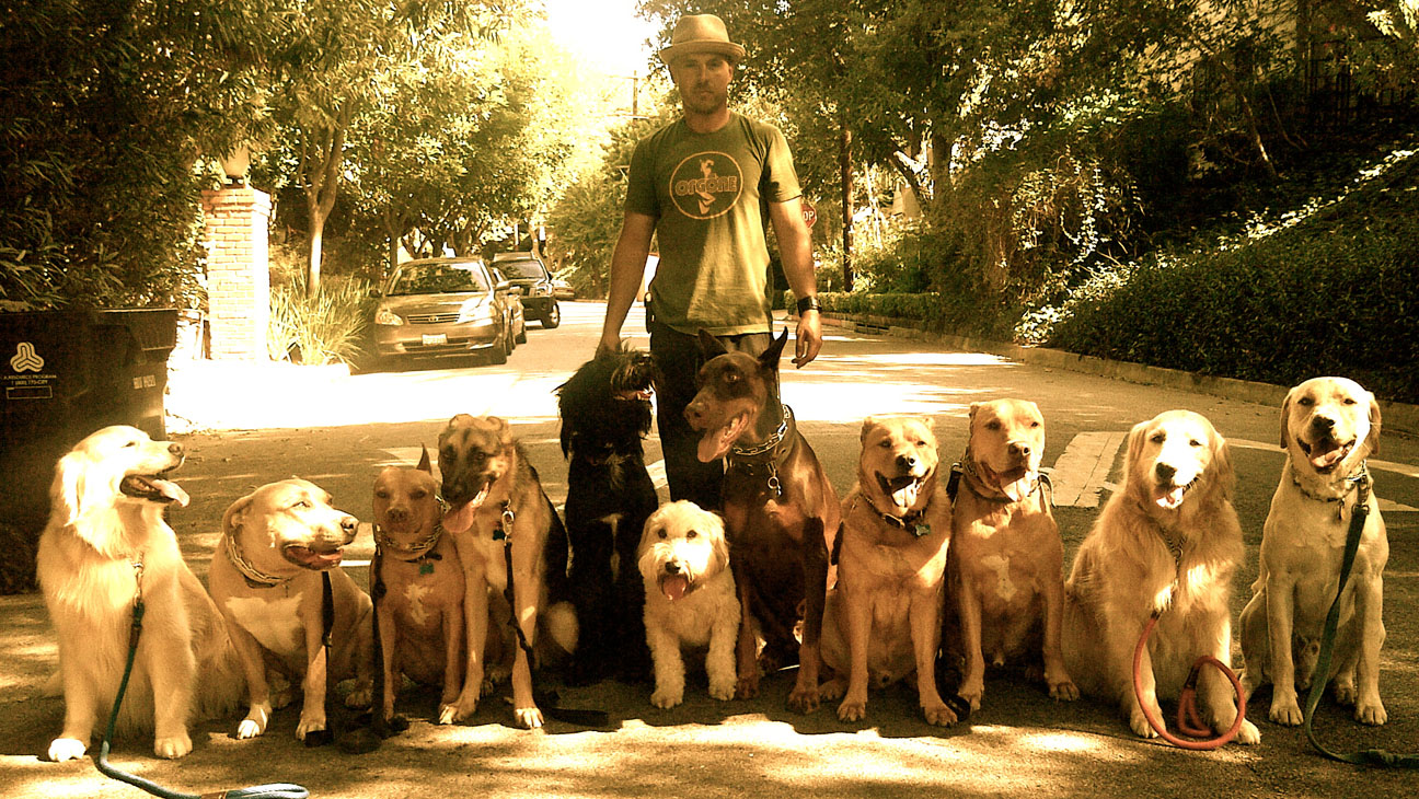 Sean O'Shea Good Dog Training - H 2014
