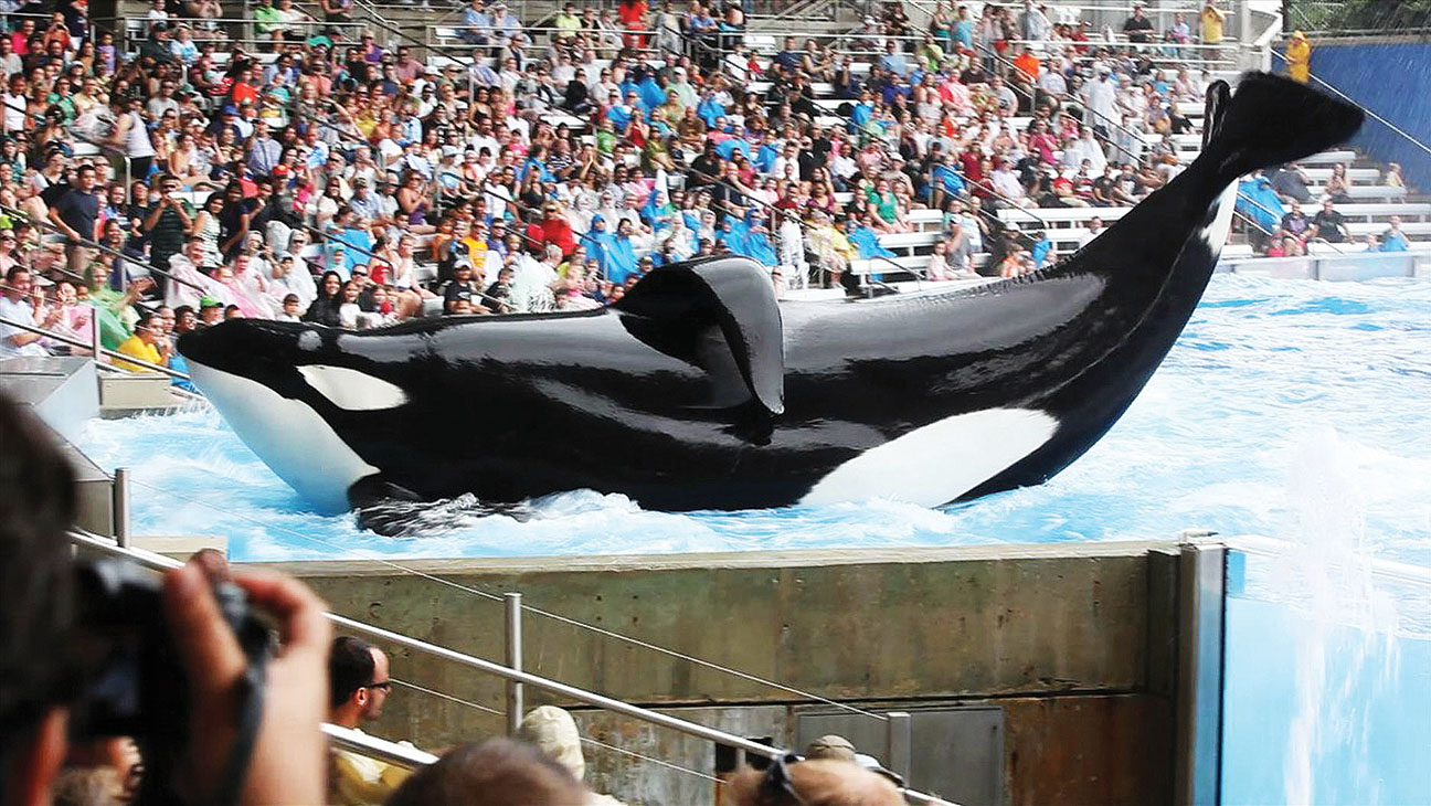 Seaworld and Blackfish - H 2014