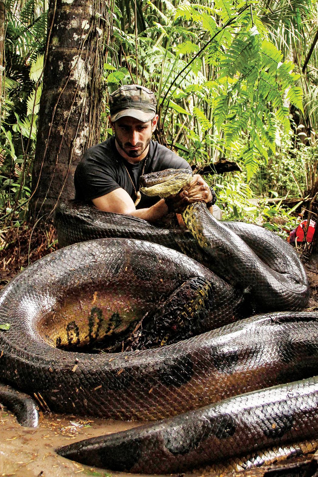 Eaten by an Anaconda - P 2014