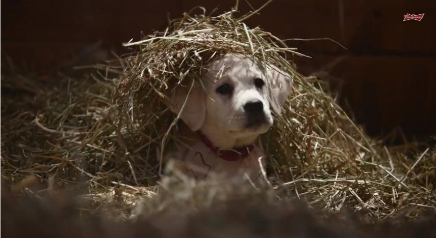 """Budweiser """"Lost Dog"""" - H 2015"""
