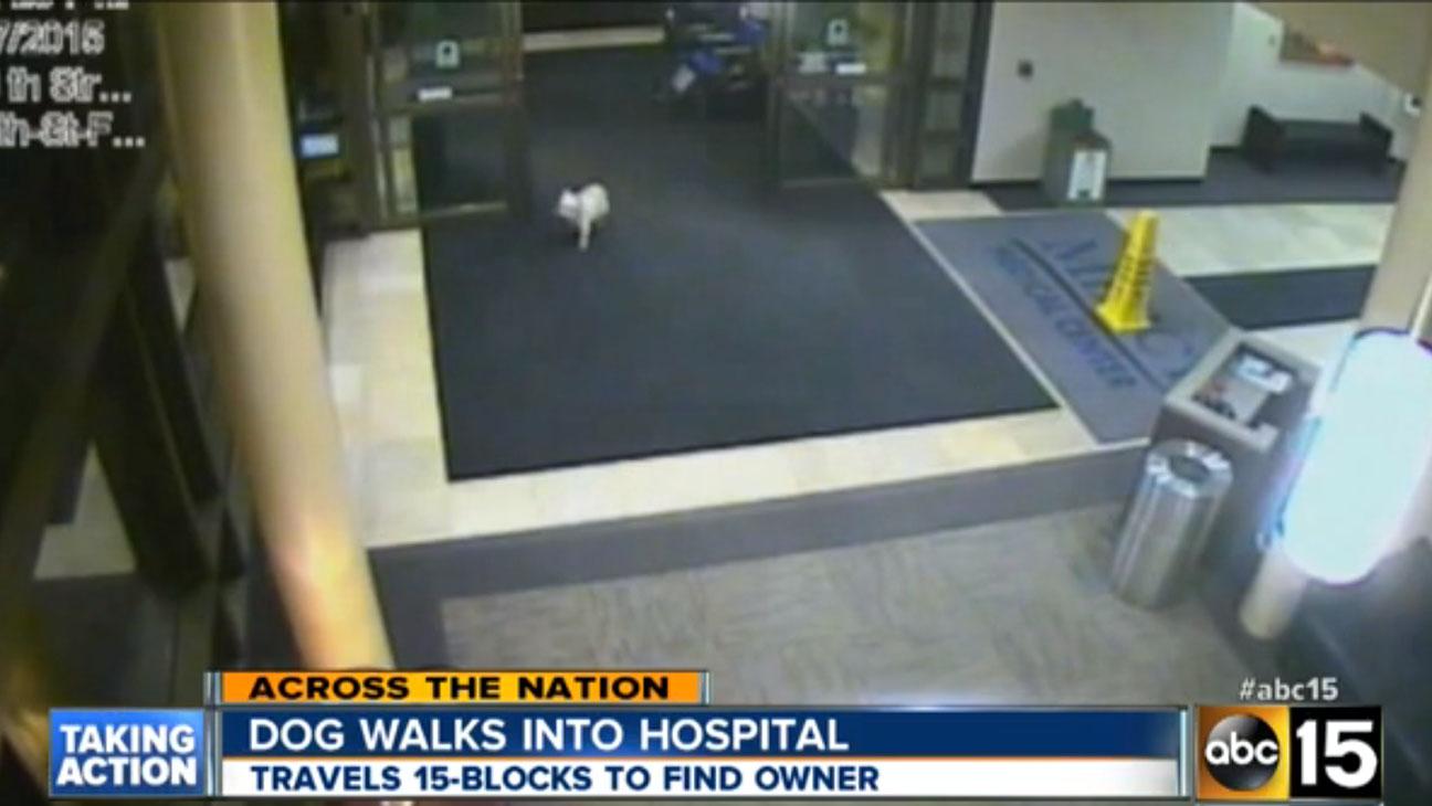 Dog Walks Into Hospital - H 2015
