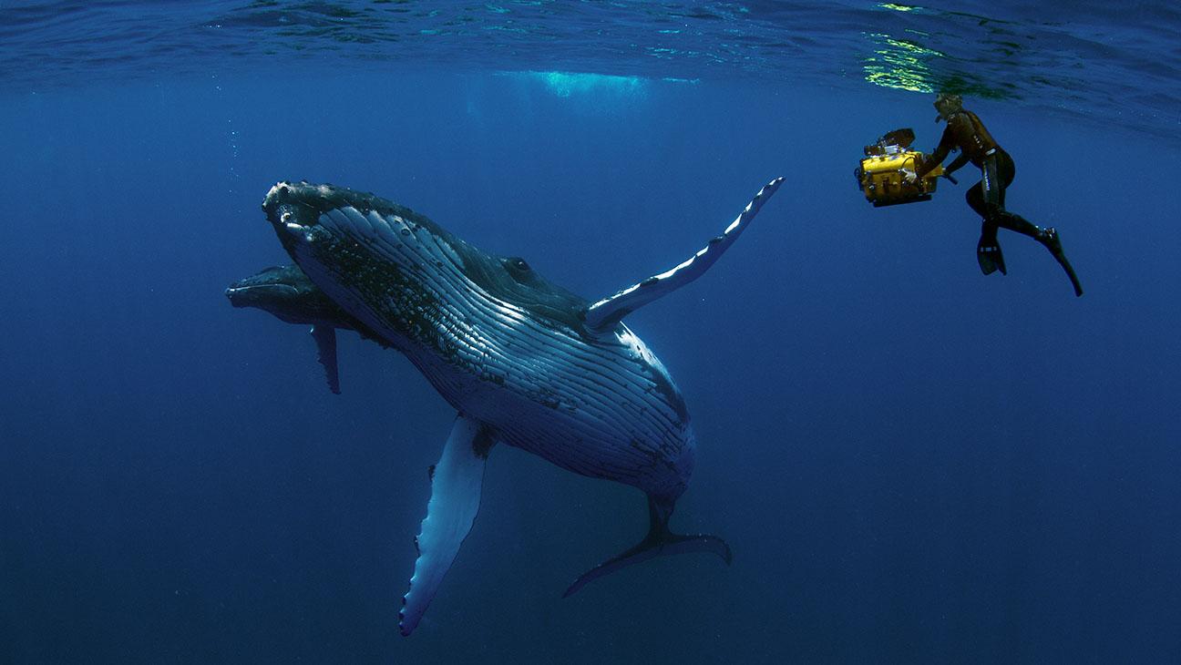 Humpback Whales Still - H 2015