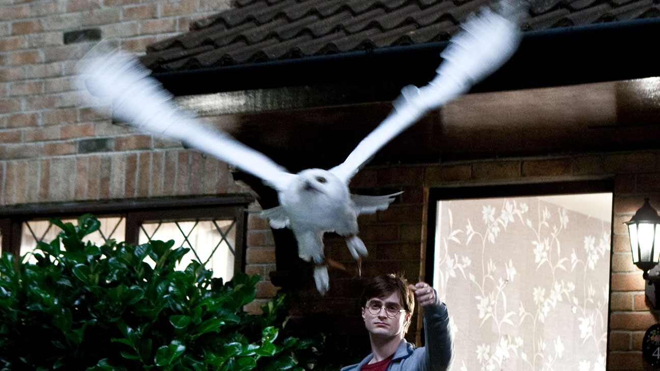 Harry Potter Owls - H 2015