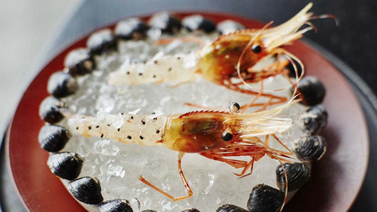 'Ants on a Shrimp' - H 2015