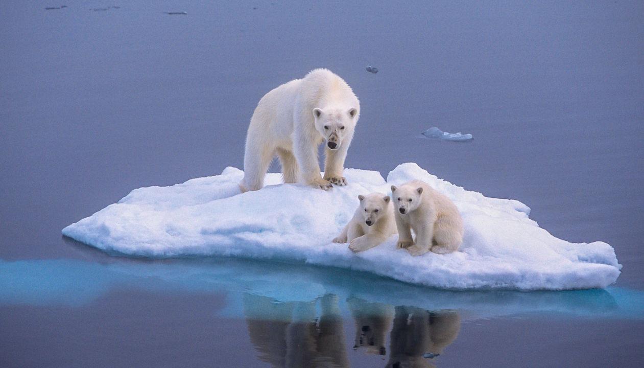 Polar Bear H 2015