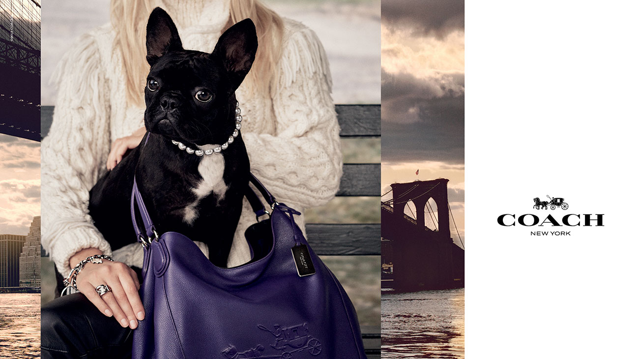 Lady Gaga Dog for Coach - H 2015