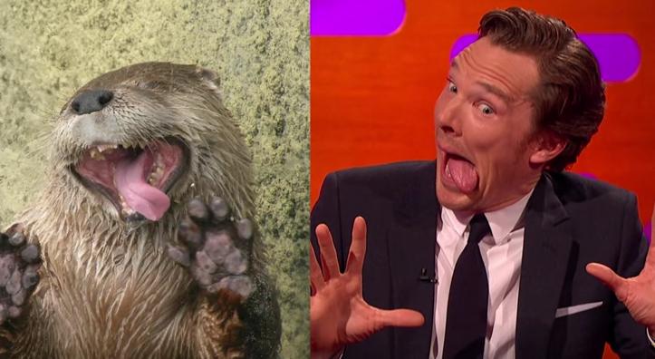 Benedict Cumberbatch Otter H 2015
