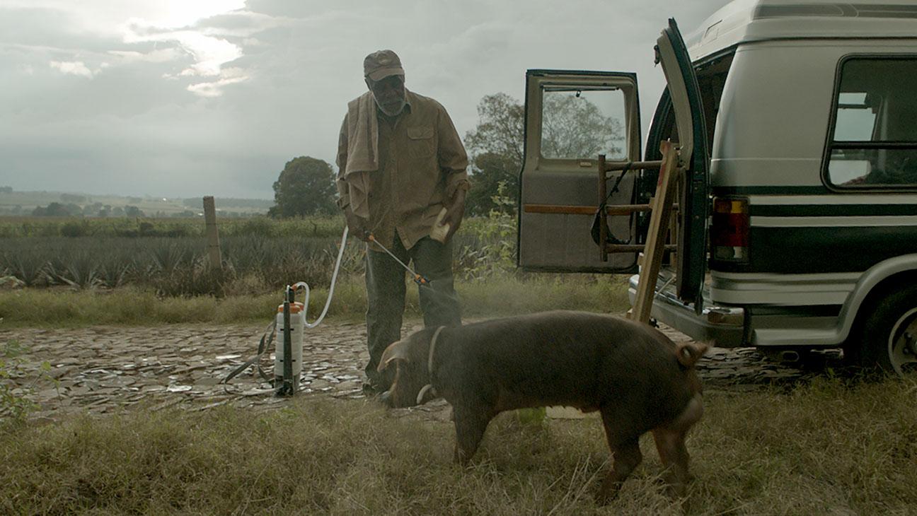 Mr. Pig still 1 - Danny Glover - H 2016