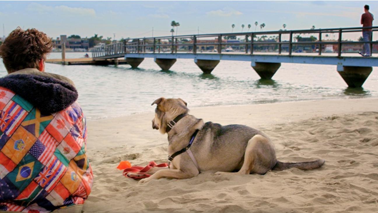 Rescue Dogs Still - H 2016