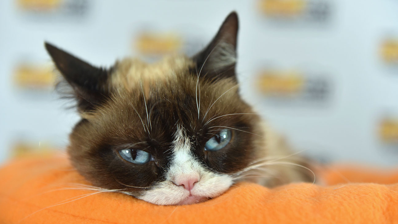 Grumpy Cat during the 2016 SXSW Music, Film and  Interactive Festival -Getty-H 2016