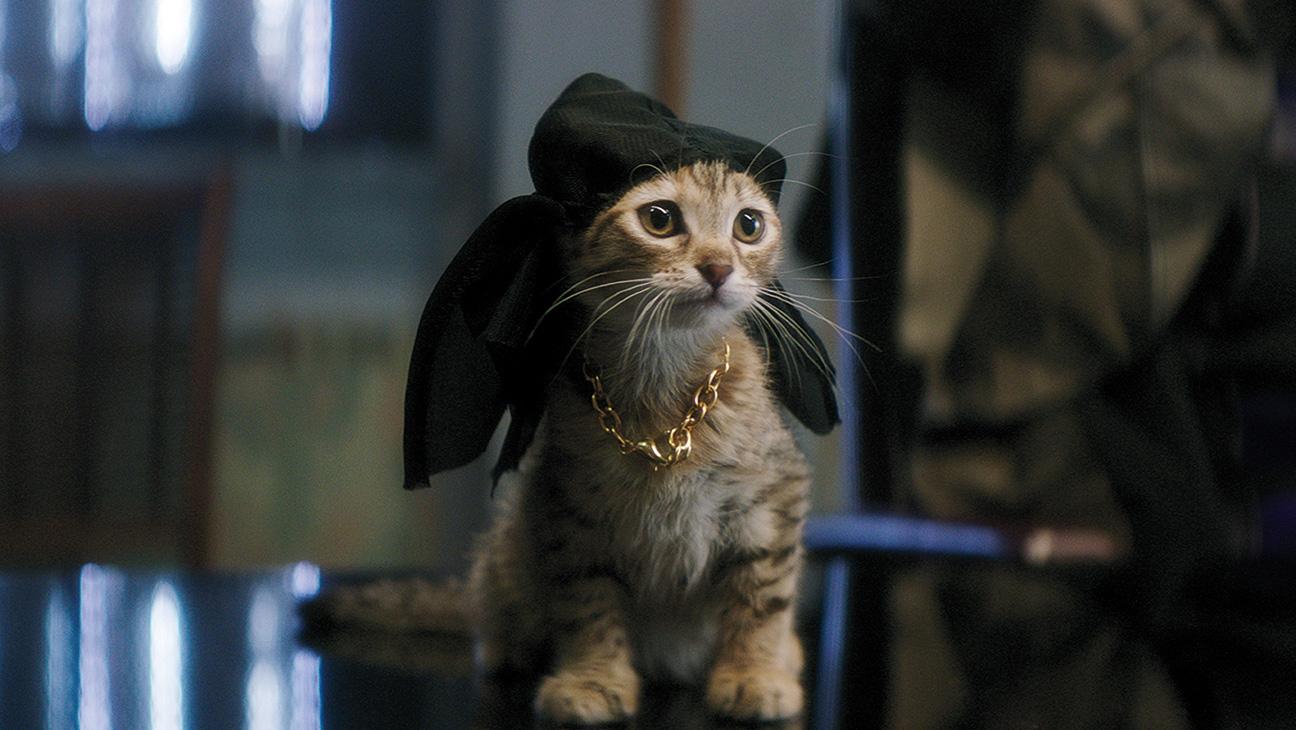 Famous Cats - Keanu Kitten - H 2016