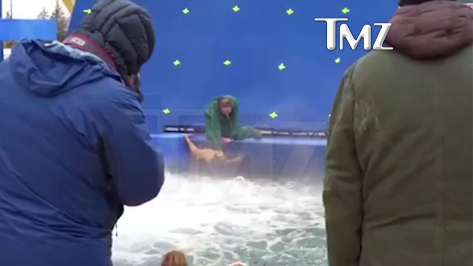 German Shepherd Forced into Water - H 2017
