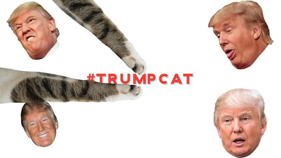 Trump Cat - Screengrab - H 2017