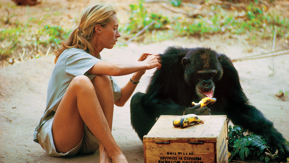 Jane Goodall Chimpanzee - Publicity - H 2017