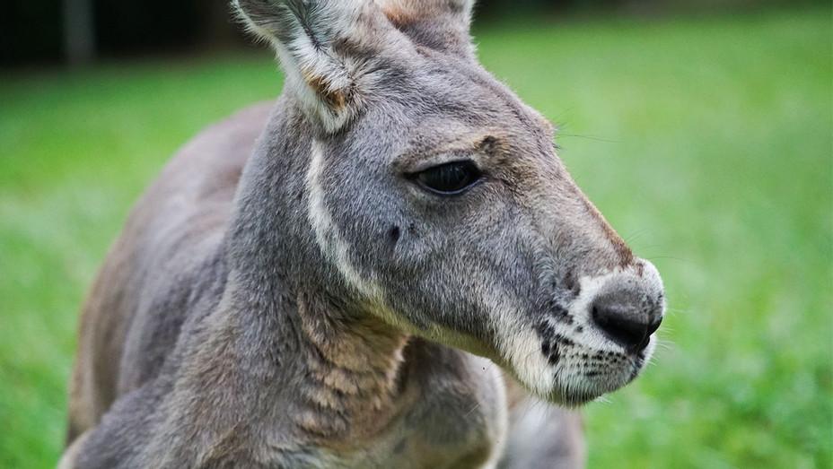 Kangaroo: A Love-Hate Story Still - Publicity - H 2018