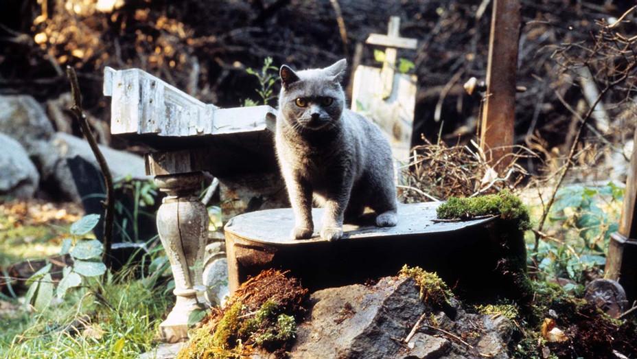 Pet Sematary (1989) - Cat - Photofest-H 2019