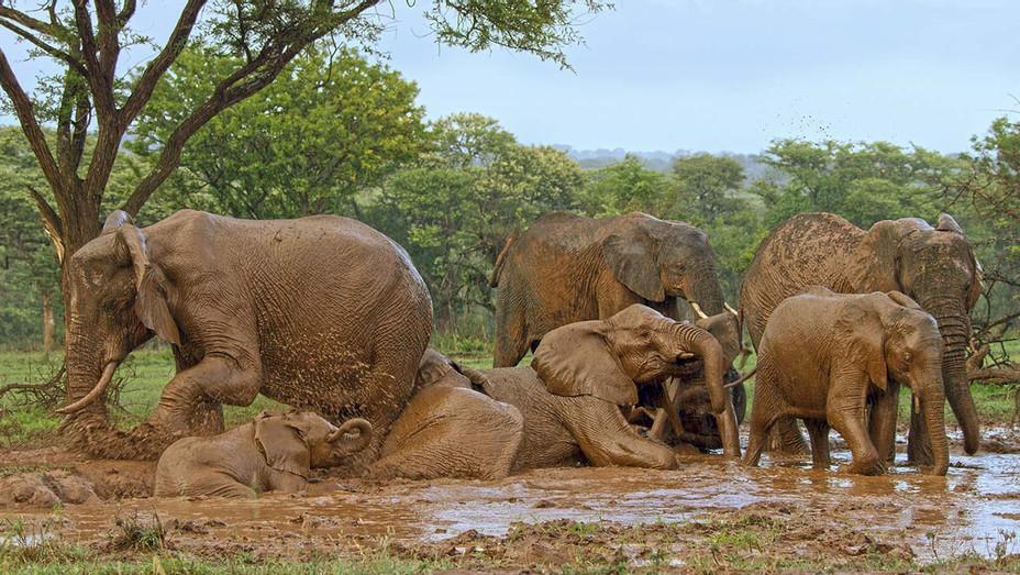 Serengeti Still - Publicity - H 2019