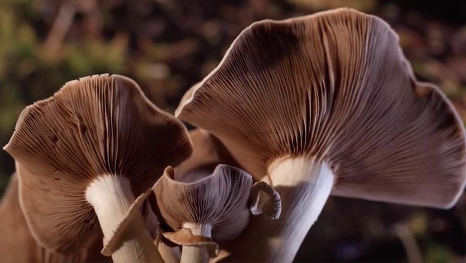 Fantastic Fungi Still 1 - Publicity- H 2019