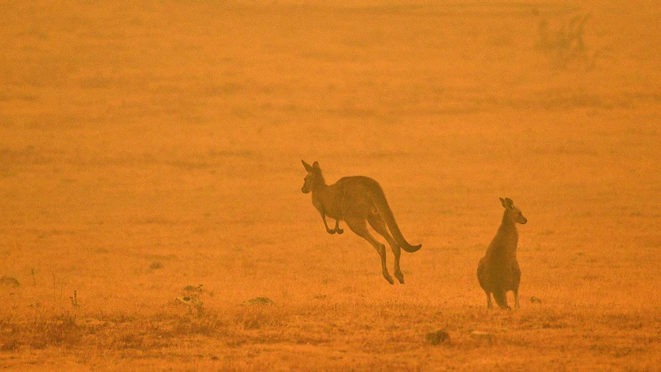 A kangaroo jumps in a field amidst smoke from a bushfire in Snowy Valley -January 4, 2020-Getty-H 2020