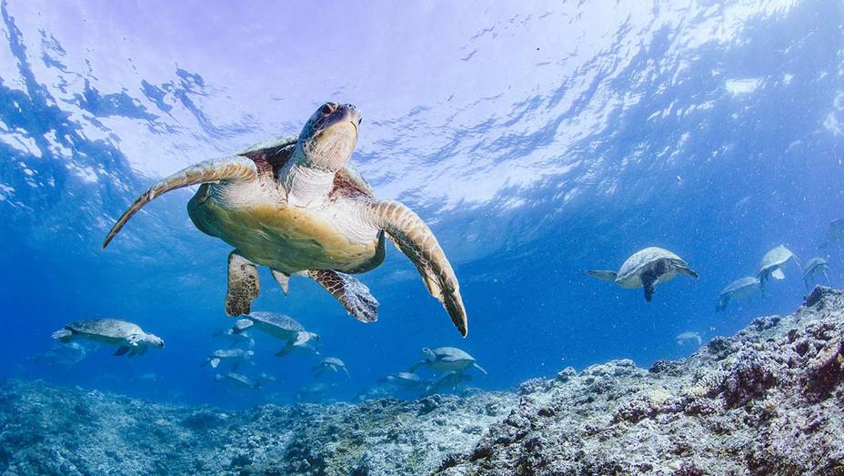 Turtle Odyssey 3D Still - Publicity - H 2020